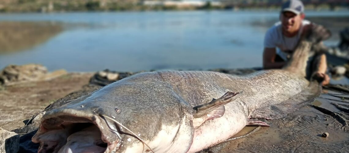 slider-pelletfischen